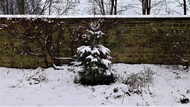 8 Christmas tree in snowy Locke Park