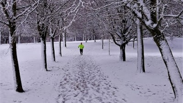 9 Snowy tree-lined path with runner